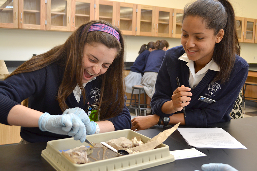 Cow eye dissection lab middle school