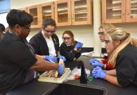 pig_dissection_0768